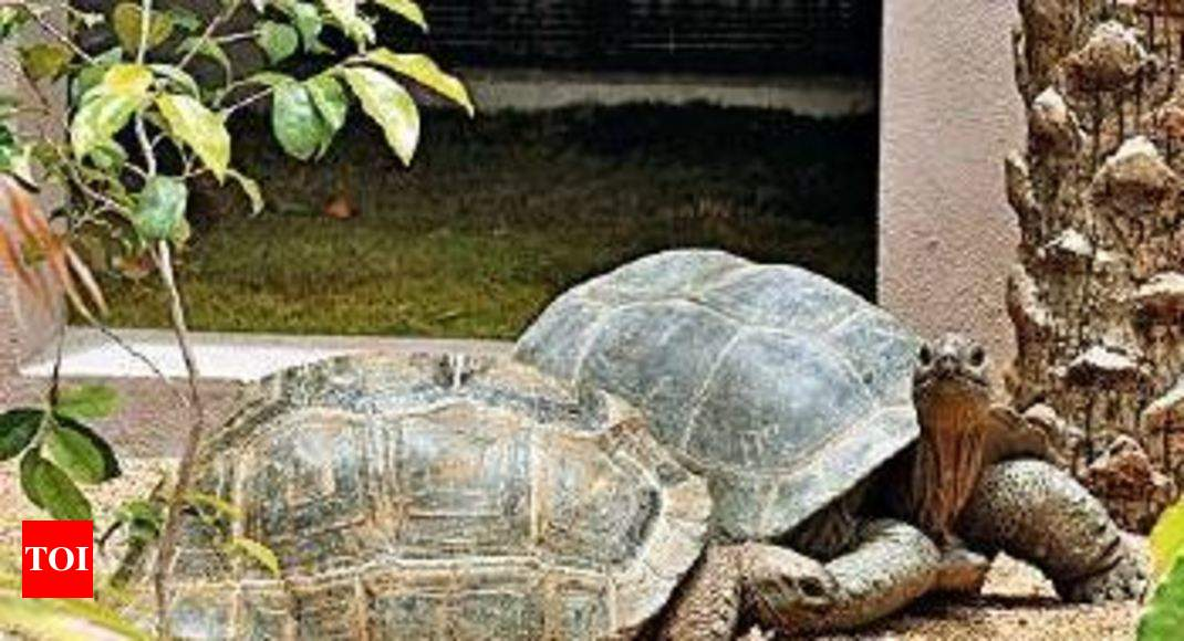 Pair Of Aldabra Giant Tortoises From Seychelles Reach Hyderabad Zoo