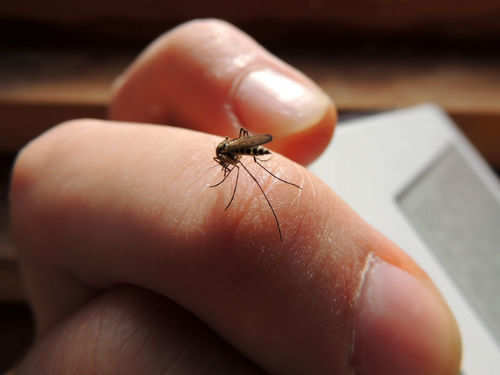 The way your body reacts to mosquito bites says this about your health |  The Times of India
