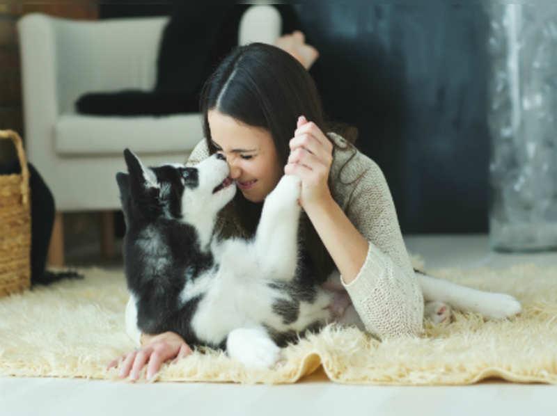 5 easy tricks you can teach your dog