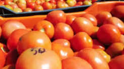 Health tips: Top 10 foods to fight anemia
