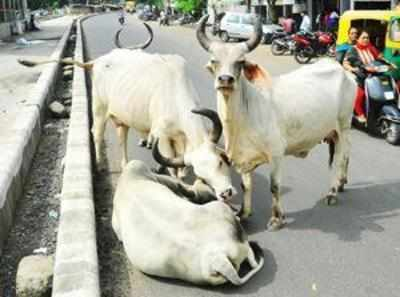 Cow urine can cure cancer: Gujarat team | India News - Times