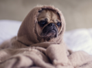 Yes, your pet dog too can get depressed