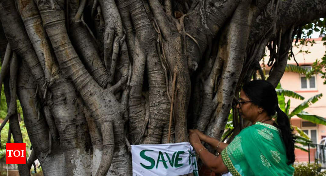 By Going Paperless Cbse Saves 50 000 Trees And Rs 100 Crore Delhi