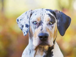 Rarest dog breeds we bet you didn't know about!