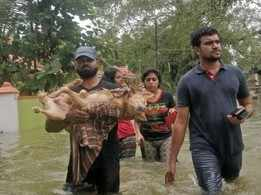 Kottayam Dog left to die in kennel during rising floods