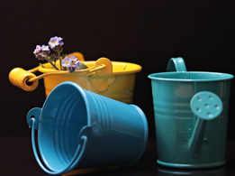 How often should you water indoor plants?