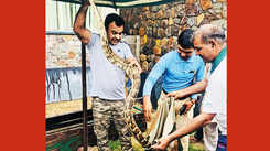 Snake sightings have grown by 200% in urban Gurgaon this monsoon