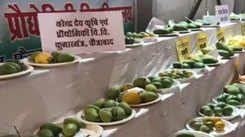 Bareilly heads to mango festivals in other cities for not-so-aam varieties