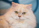 7 awesome facts about cats