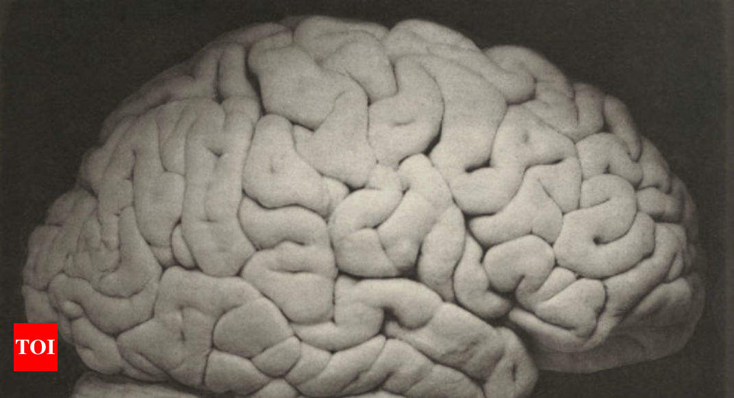 Probiotic Supplements May Be Linked To Brain Fogginess Times Of India