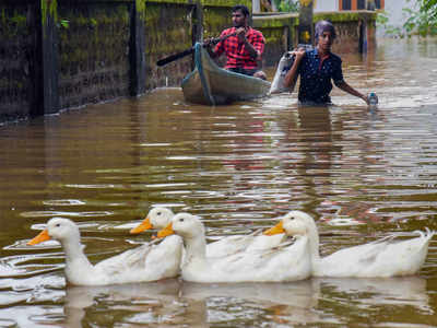 When It Rains It Swans >> Kerala Rains Red Alert In Kozhikode Kozhikode News Times Of India