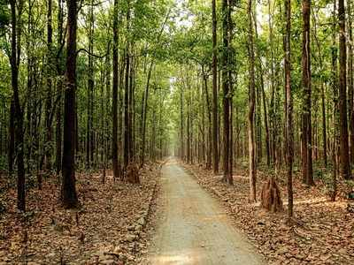 corbett tiger reserve: Not satisfied with management of