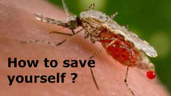Mosquito-borne diseases: Dos and don'ts to stay safe from Malaria, Dengue and Chikungunya fever