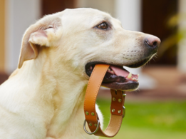 Things to know before putting a collar on your dog