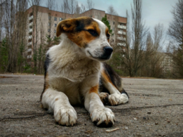 Protect your pets from air pollution