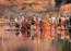 Aurangabadkars celebrate Chatth festival