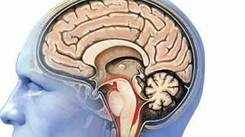 Know how head injuries lead to serious brain diseases