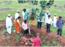 Aurangabadkars plant medicinal plants