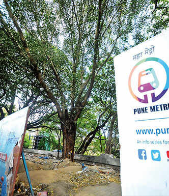 Peepal tree stands in the way of Metro work on riverbed