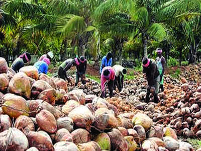 Coconut, coir pith prices soar post Gaja | Coimbatore News