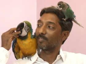 Locanto Bangalore Birds