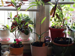 The secret to healthy home garden!