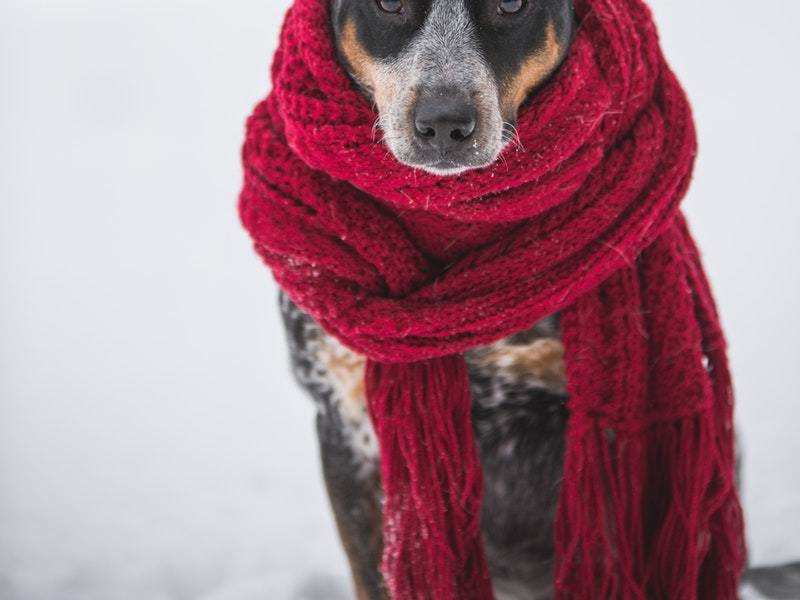 It's time to gear up for your pet's winter care
