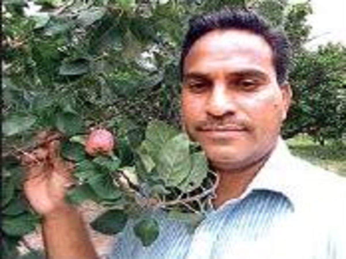 Telangana Farmer Replicates The Famed Apple Orchards Of Kashmir In Deccan Hyderabad News Times Of India
