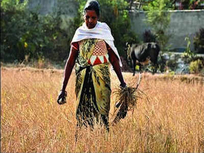 Jharkhand govt to give farmers Rs 5,000 per acre aid every year