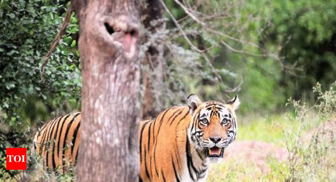 Image result for NGT puts brakes on mining near Sariska Tiger Reserve