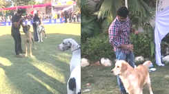 Ahmedabad gathered for a dog show