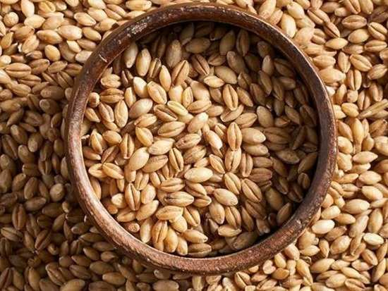 A new kind of carbohydrate found in barley: study