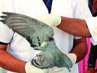 Found injured bird? Call rescuers using this application | Rajkot