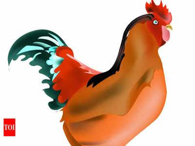 Bird flu alert in East Singhbhum district | Jamshedpur News