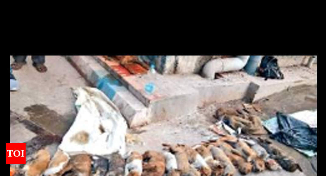 Torture & murder of pups shocks Kolkata's conscience - Times of India