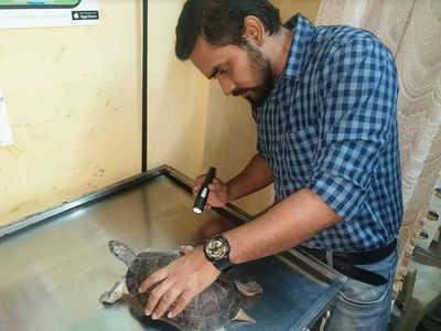Animal activists rescue endangered turtles in Mumbai