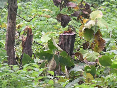 Telangana Govt S Green Efforts In Vain As Smugglers Cart
