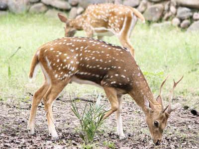 56 species of deer adopted at Chhatbir zoo last year