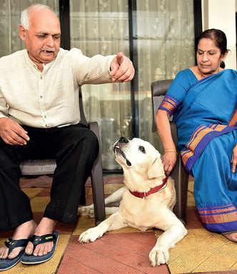 Doctors fix dog's vision