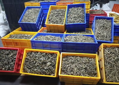 Customs officials seize Rs 7crore worth shark fins, pangolin scales