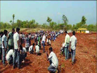 Agri varsity students plant 200 silver oak trees