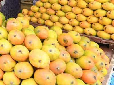 Mangoes arrive, but costly | Coimbatore News - Times of India