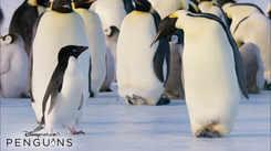 Penguins - Official Teaser