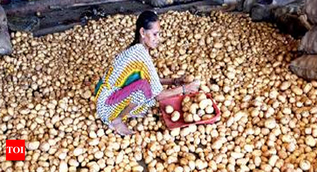 Hot potato: Guj farmers sued for copy-farming