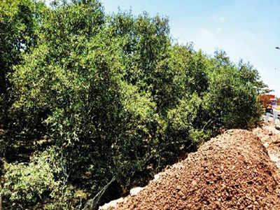Mangroves near Vashi choke under debris   Navi Mumbai News