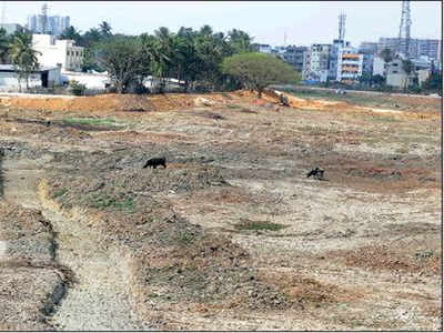 57c3a8cfbaca NOT A DROP TO DRINK: A file picture of Gottigere Lake near Bannerghatta in  Bengaluru, which has run dry