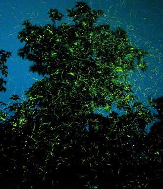 Trekkers turn conscious about fireflies festivals