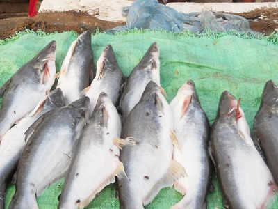 Trout fish farming a non-starter in Uttarkashi | Dehradun ...