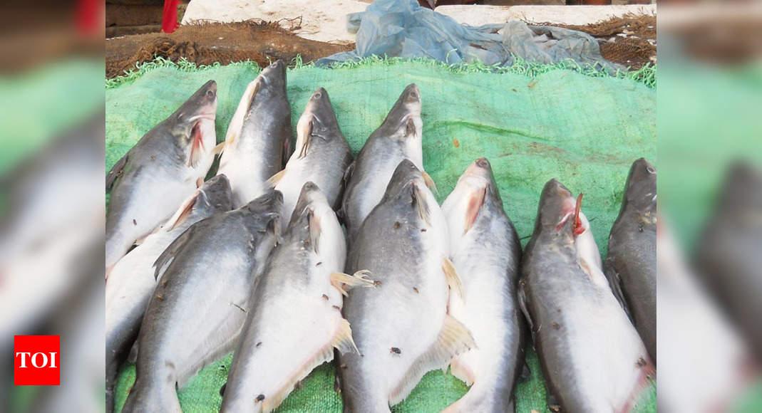 Trout Fish Farming A Non Starter In Uttarkashi Dehradun News Times Of India
