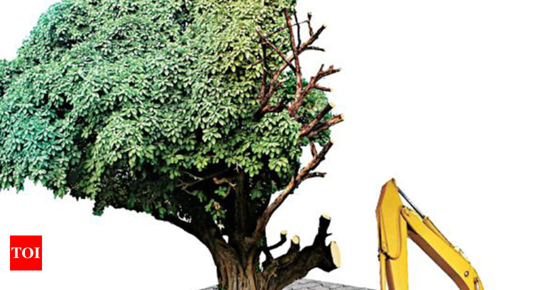 9,000 trees may be axed for road project in Hyderabad   Hyderabad